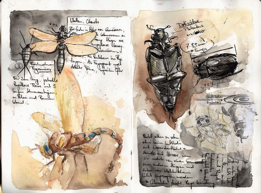 Watercolor drawing of insects
