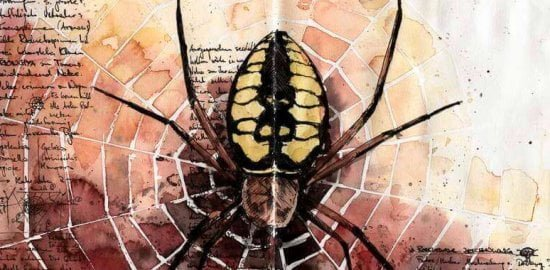 Watercolor drawing of spider with skull on back